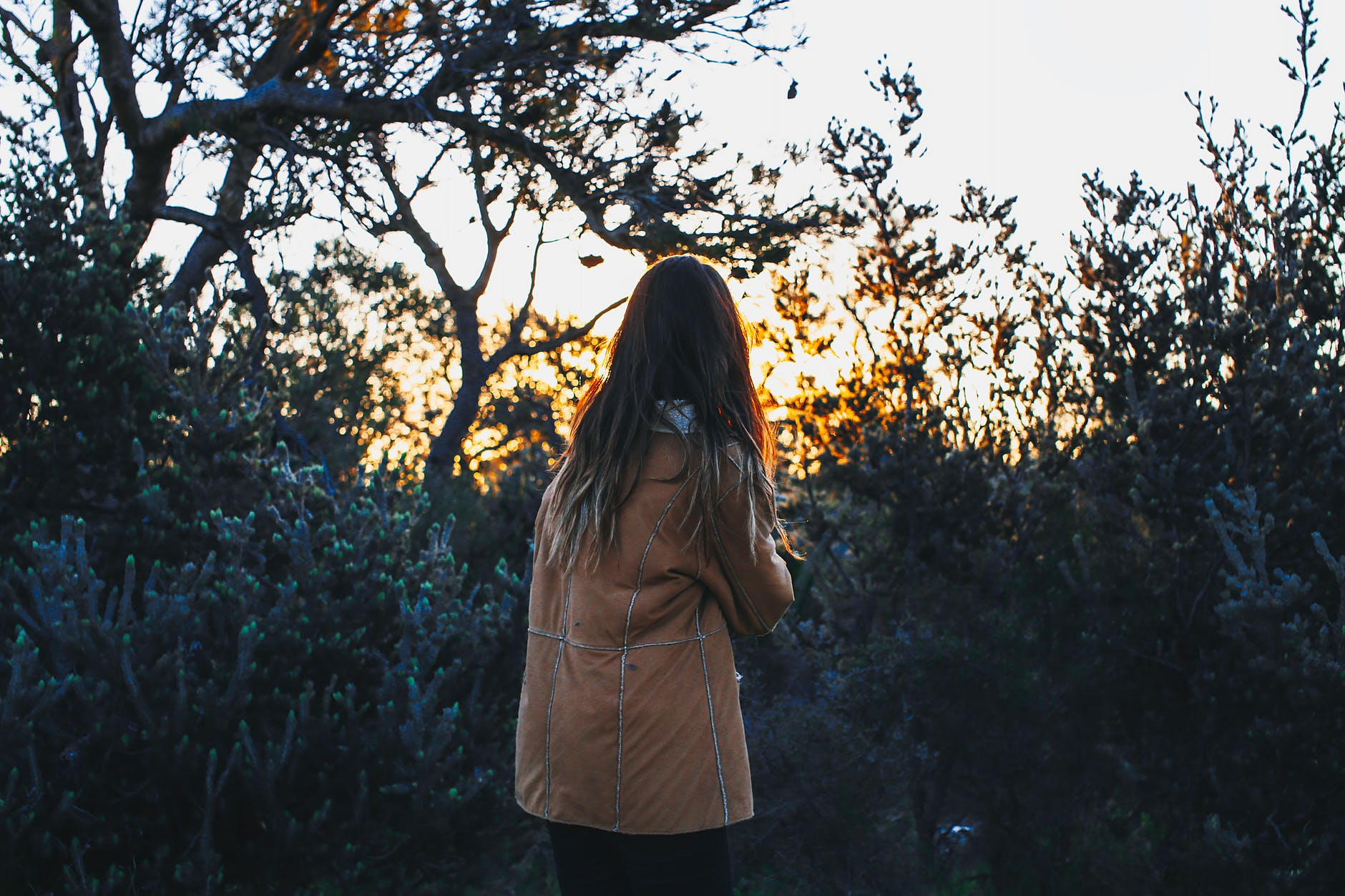 anonymous lady admiring nature in forest at sundown